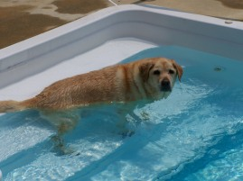 Lexi in the pool